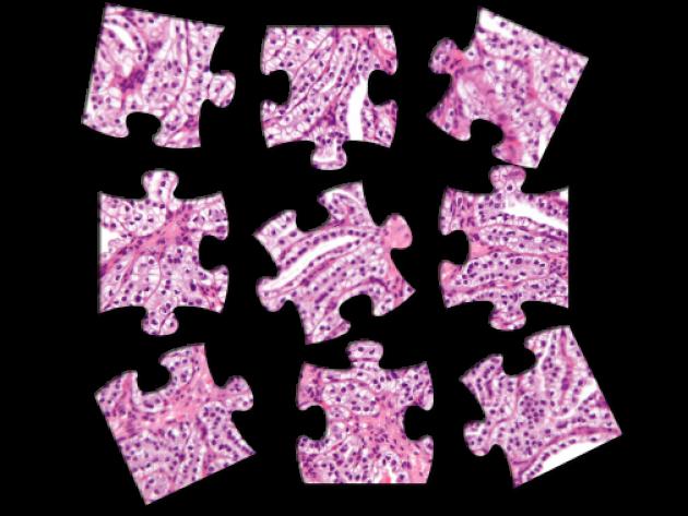 Роснаука о Pathology Puzzles International